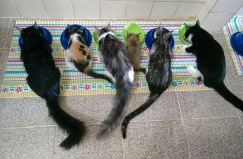 Γατάκι αδέσποτο τρώει μαζί με άλλα