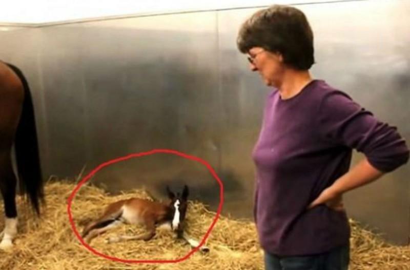 Δεν είχαν ιδέα ότι η φοράδα τους ήταν έγκυος - Όταν όμως γέννησε τους περίμενε μια μεγαλύτερη έκπληξη (Video)