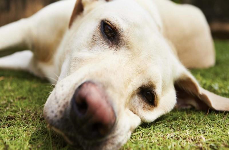Έπιασαν 77χρονο που δηλητηρίασε σκύλο με φόλα στην Λιβαδειά