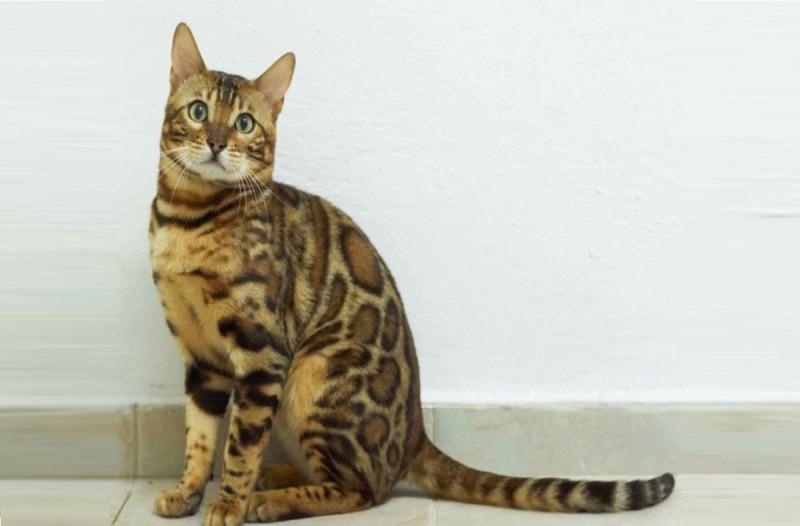 Η νεά εφαρμογή που μεταφράσει τα νιάου της γάτας