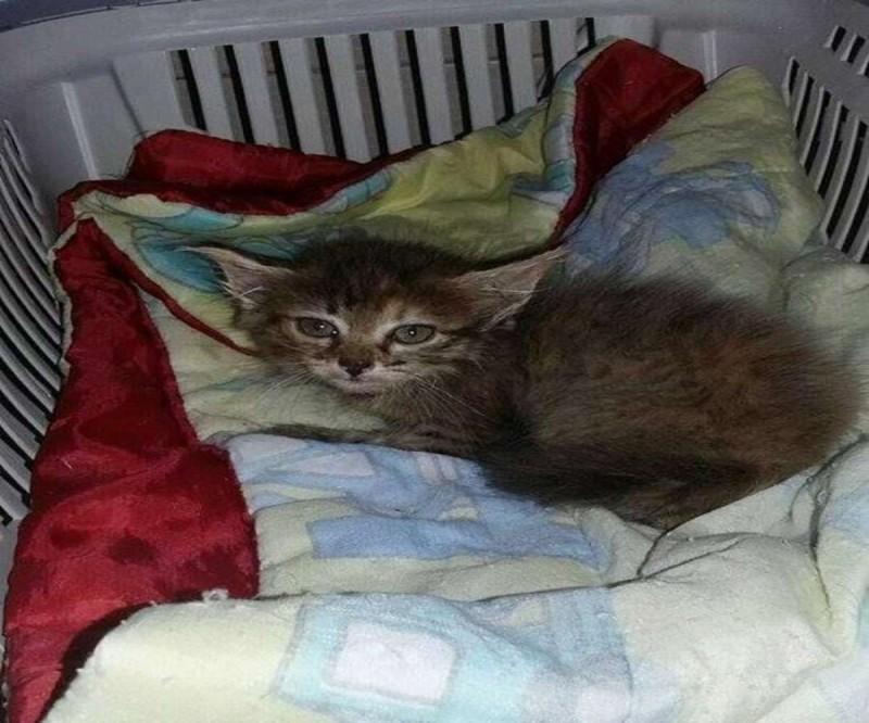Γατάκι αδέσποτο βρήκε σπίτι