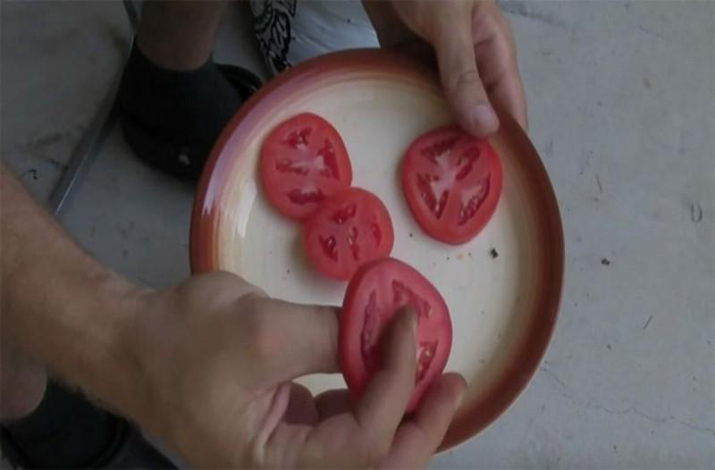 Καλλιεργείστε δικές σας ντομάτες με τον πιο εύκολο τρόπο
