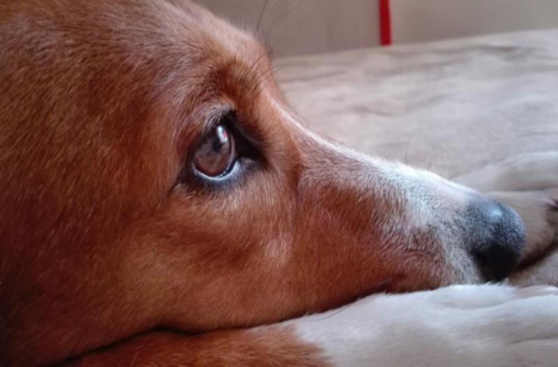 Τα σημάδια που δείχνουν πως ο σκύλος σας πλησιάζει στο τέλος του