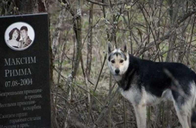 Σκύλος δεν εγκαταλείπει τον τάφο των ιδιοκτητών του εδώ και 16 χρόνια