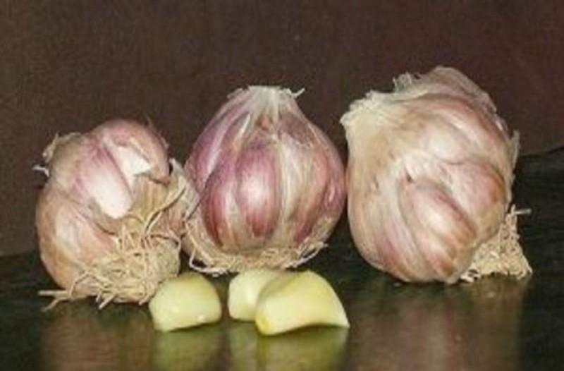 Μεγάλη Προσοχή: 6 λόγοι που πρέπει να σταματήσετε να καταναλώνετε σκόρδο αμέσως