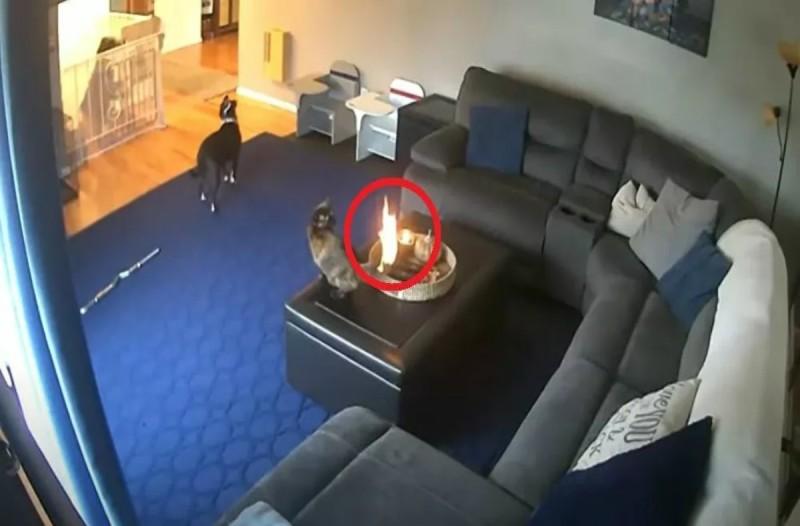 Μία γάτα έπαιζε με τον σκύλο αλλά αυτό που συνέβη την έκανε να... (video)
