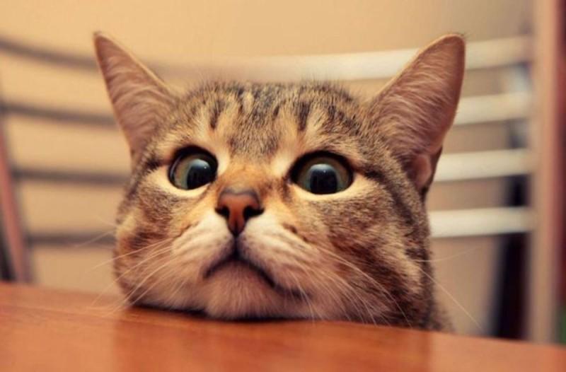 Έβαλε κάμερα το βράδυ για να δει τι κάνει η γάτα του ότνα κοιμάται