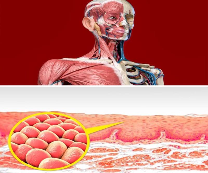 Τι θα συμβεί στα κύτταρα σας αν τρώτε πιο συχνά κρεμμύδια