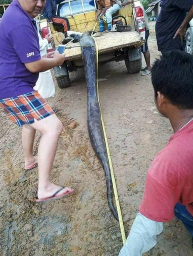 Φίδι και πύθωνας