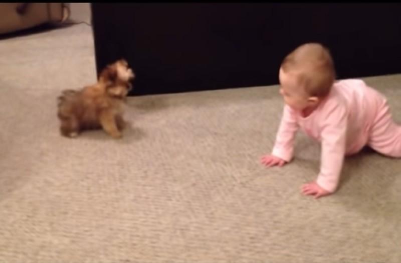 Πατέρας τραβάει με την κάμερα το μωράκι του ενώ συζητάει με τον σκύλο - Θα «λιώσετε» (Video)