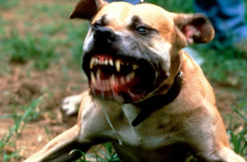Τραγωδία: Σκύλος κατασπάραξε 14χρονο