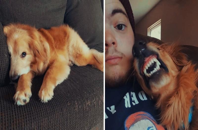Σκύλος: Νόμιζαν ότι ήταν επιθετικός και αντικοινωνικός, αλλά προσπαθούσε να χαμογελάσει - Ένα αγόρι ήθελε να τον υιοθετήσει