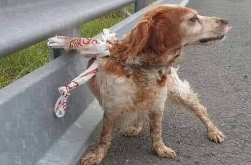 Άνανδρος έδεσε τον σκύλο του στη μέση του δρόμου και έφυγε – Μπερδεμένος ο σκύλος τον περίμενε