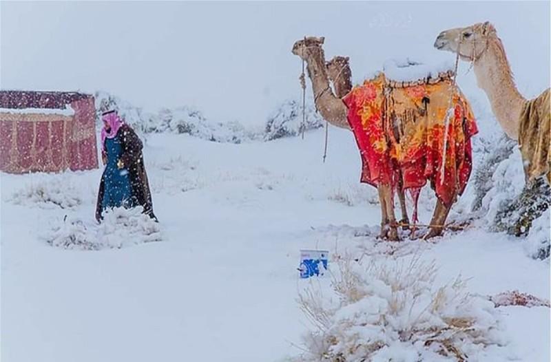 Καιρός: Χιόνια, μέχρι και στη Σαχάρα! Πρόβατα και καμήλες το έριξαν στο... «σκι» (photo-video)