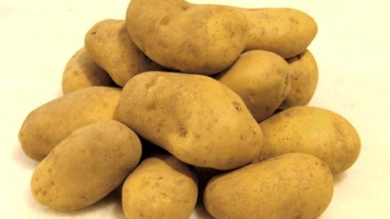 Πώς ο καρκίνος του παχέος εντέρου συνδέεται με τις πατάτες που τρώμε