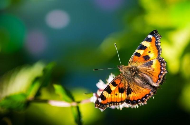 Εξάνθημα σε σχήμα πεταλούδας στο πρόσωπο