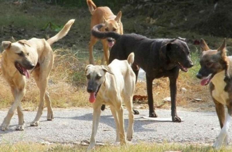 Ηλεία: Μαρτυρικός θάνατος 56χρονου πατέρα - Τον κατασπάραξαν σκυλιά!