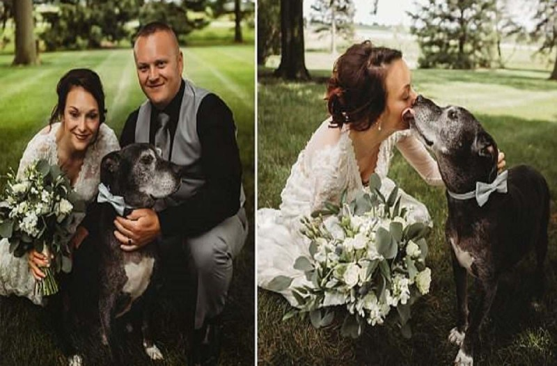 Ετοιμοθάνατος σκύλος με καρκίνο παλεύει να κρατηθεί στη ζωή για να συνοδεύσει την ιδιοκτήτριά του στο γάμο της