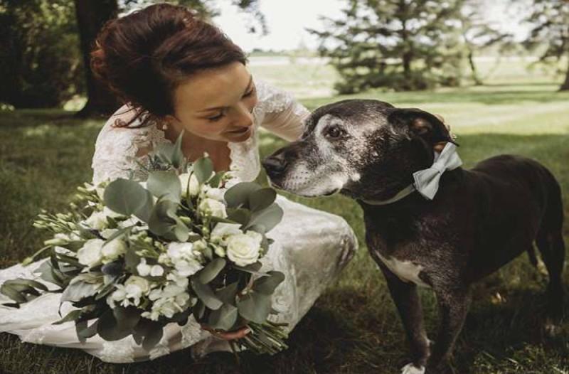 Σκύλος συνοδεύει την ιδιοκτήτριά του στο γάμο της παρά το πρόβλημα που αντιμετωπίζει με τον καρκίνο