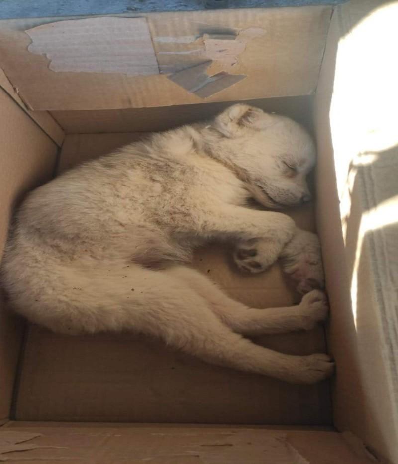Πέταξαν κουτάβι στα σκουπίδια αφού πρώτα του έκοψαν τα αυτιά.