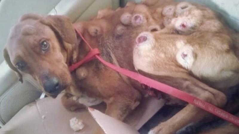Όταν έφερε τον σκύλο σπίτι ήταν σε τραγική κατάσταση - Μόλις δείτε πώς είναι σήμερα, δε θα το πιστεύετε!