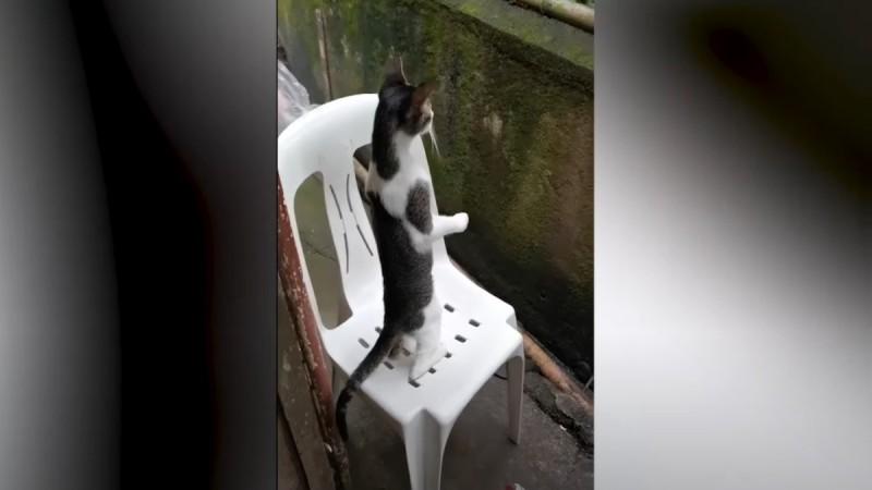 Απίστευτο και όμως αληθινό: Γάτα βρήκε τον καλύτερο τρόπο να κουτσομπολεύει ολόκληρη την γειτονιά (video)