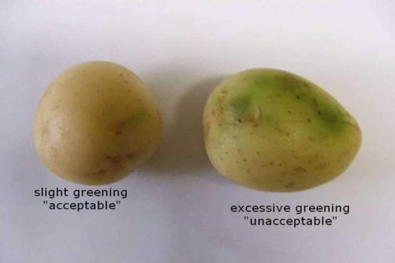 Πώς είναι οι ακατάλληλες πατάτες