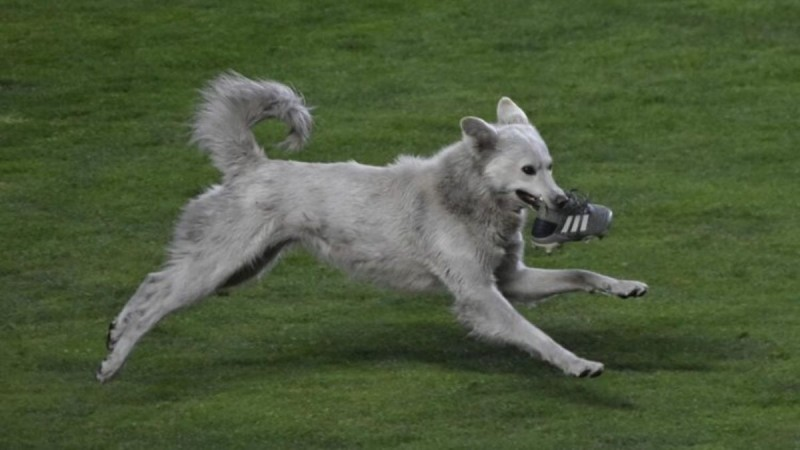 Αδέσποτος σκύλος μπήκε σε ποδοσφαιρικό αγώνα και