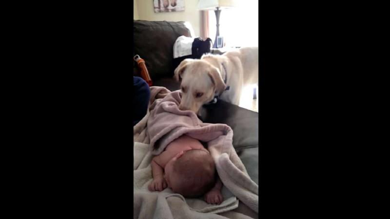 Κάμερα καταγράφει κρυφά τι κάνει ο σκύλος ενώ το μωρό κοιμάται - Στο 0:04 η καρδιά σας θα «λιώσει»