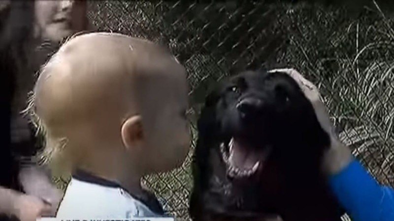 Ο σκύλος γάβγιζε στην babysitter και ο πατέρας έβαλε κάμερα- Δεν φαντάζεστε τι ανακάλυψε (video)