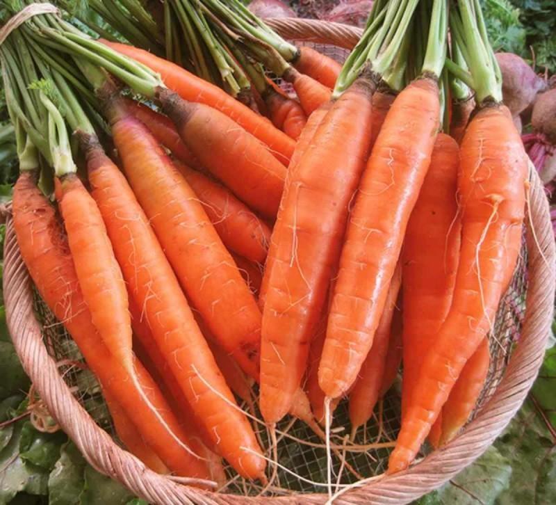 Καρότα κατά του καρκίνου