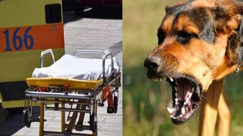 Κόρινθος: Αδέσποτος σκύλος δάγκωσε 8χρονο! «Το πρόσωπο του ήταν γεμάτο με αίματα» (Video)