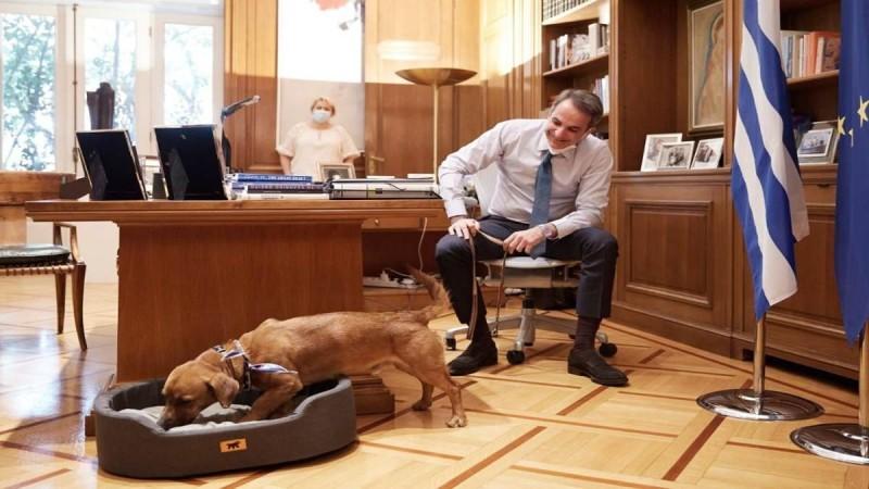 Το Μέγαρο Μαξίμου υιοθέτησε για πρώτη φορά αδέσποτο σκύλο (photo)