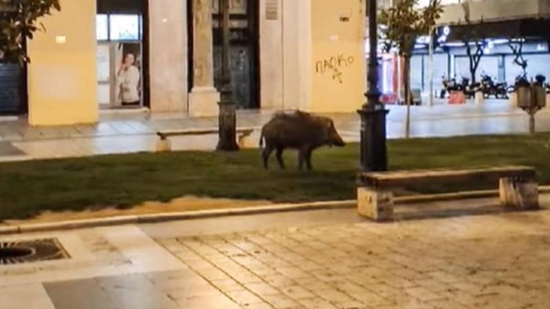 Θεσσαλονίκη: Αγριογούρουνο έκοβε βόλτες στην Αριστοτέλους
