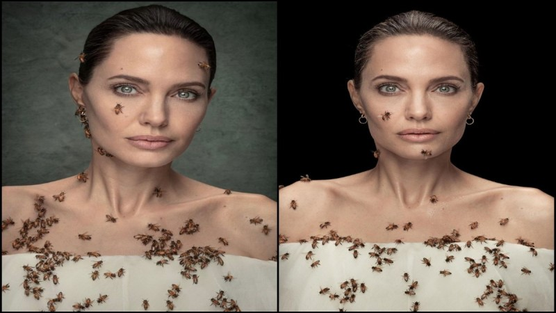 angelina-jolie-bees-national-geographic