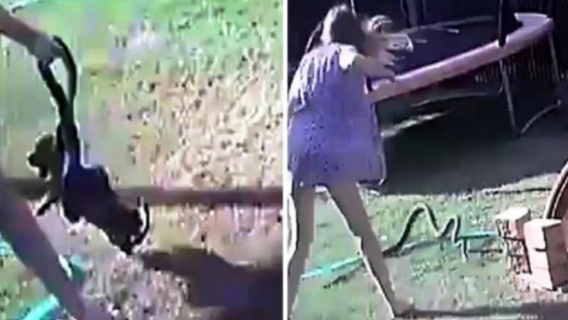 Γυναίκα παλεύει με ένα φίδι στον κήπο της για να σώσει το σκυλί της