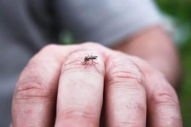 Κουνούπια: Γιατί είναι επιλεκτικά - Παίζει ρόλο το αίμα, το φύλο, τα κιλά; Γιατί βουίζουν στα αυτιά μας;