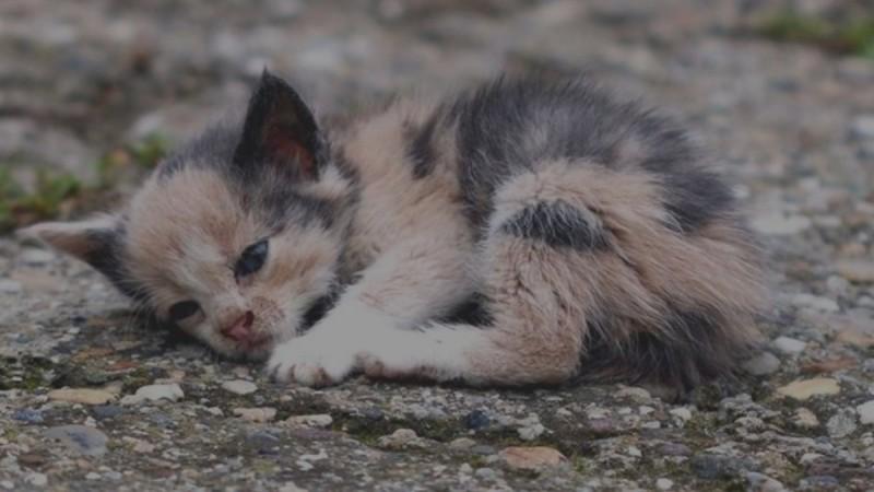 Κτηνωδία στη Νέα Σμύρνη: Ηλικιωμένη μαχαίρωσε νεογέννητα γατιά στην αυλή της