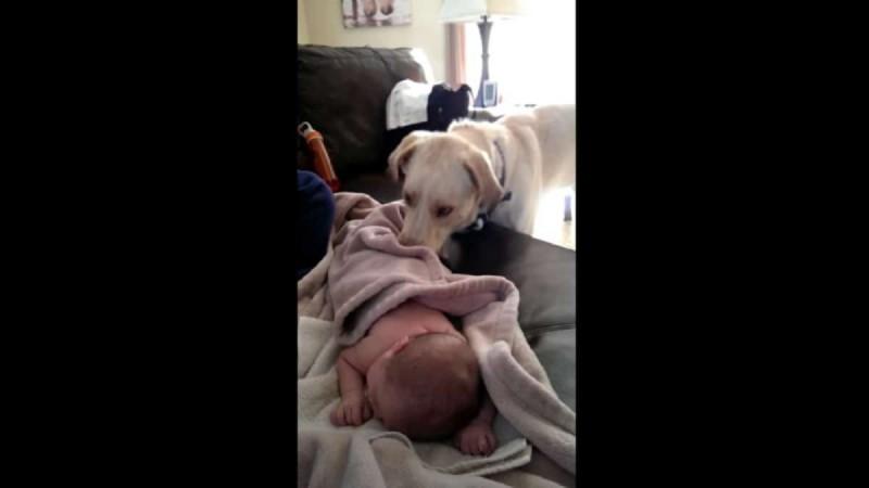 Κάμερα καταγράφει κρυφά τι κάνει ο σκύλος ενώ το μωρό κοιμάται - Δείτε στο 0:04 και θα πάθετε σοκ