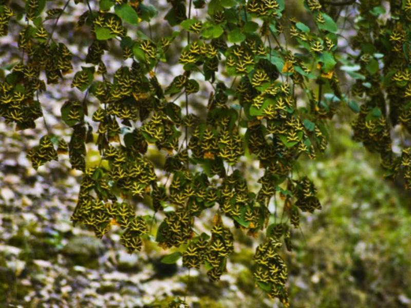 Κοιλάδα των Πεταλούδων