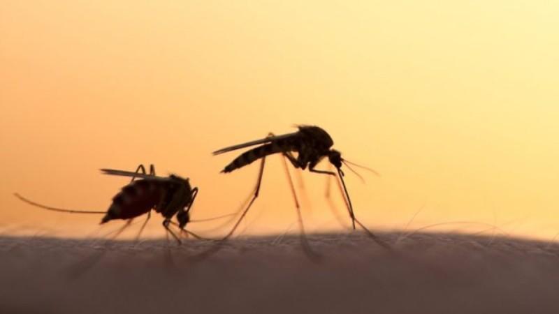 Κουνούπια: 5 τρόποι να απαλλαγείτε!- Ο λόγος που μας τσιμπάνε το καλοκαίρι