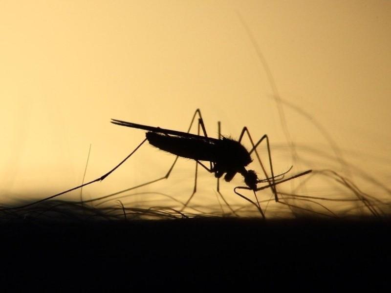 Κουνούπια: 5 τρόποι να απαλλαγείτε