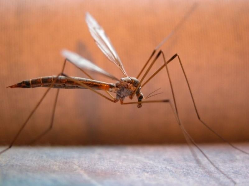 Κουνούπια: Ο λόγος που μας τσιμπάνε το καλοκαίρι