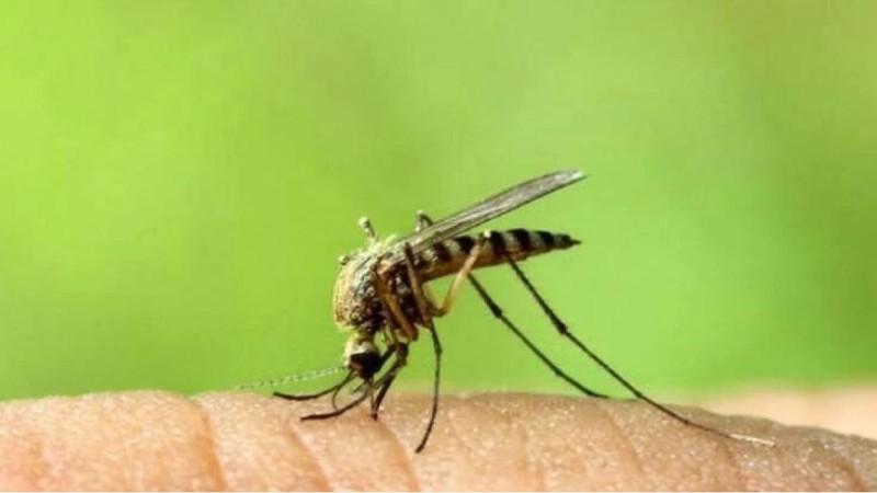 Κουνούπια: Γιατί κάποιους τους τσιμπάνε και κάποιους όχι;