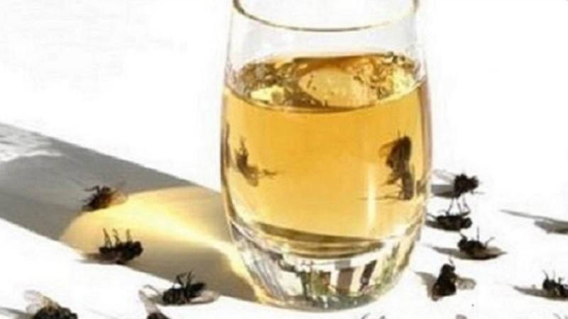 Εξαφανίστε τις μύγες με αυτή τη σπιτική συνταγή - 7+1 έξυπνοι τρόποι για να τις ξεφορτωθείτε