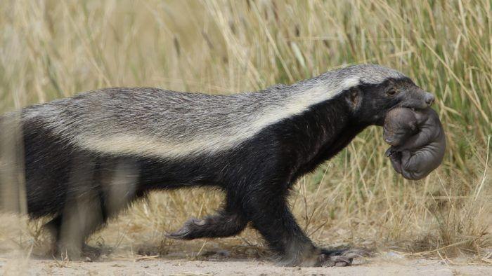 Το πιο επικίνδυνο ζώο στον κόσμο