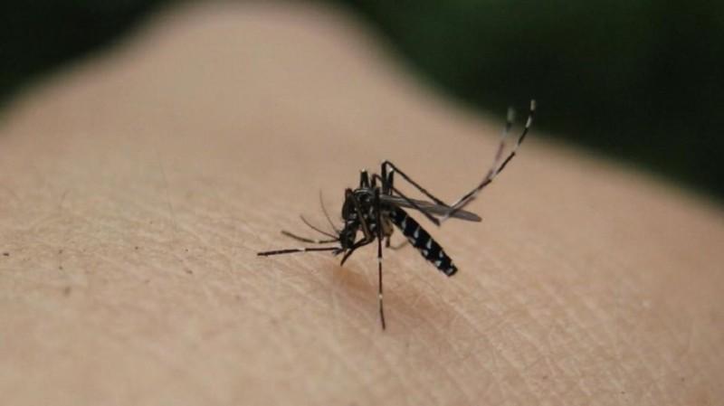 κουνούπια εντομοαπωθητικό