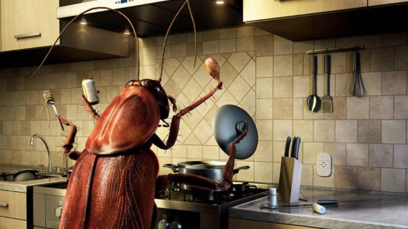 14 Πράγματα που δεν θα θέλατε να ξέρατε για τις κατσαρίδες - Πως θα τις εξαφανίσετε;