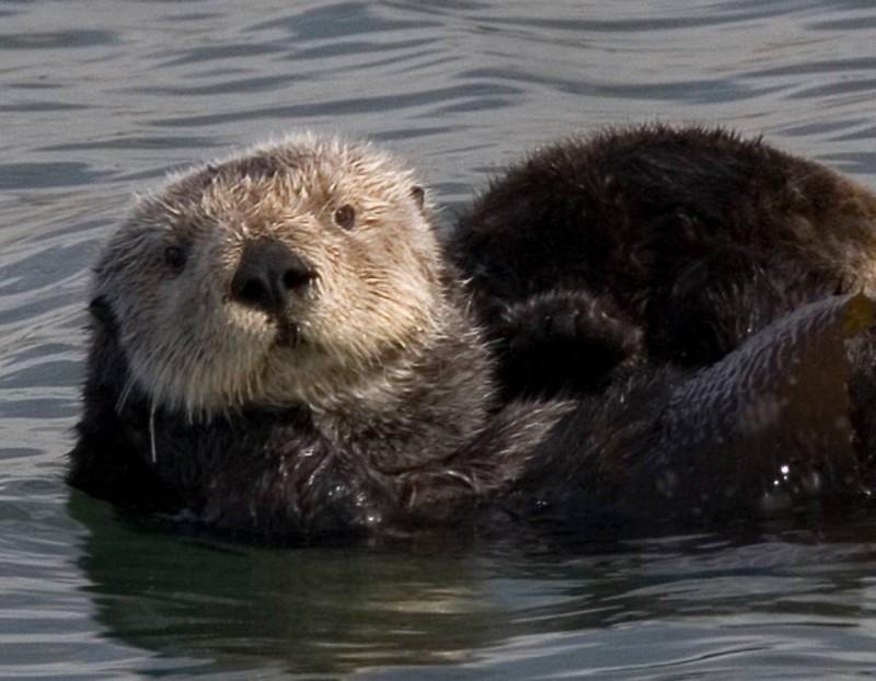 Μπήκε στο νερό και ένιωσε στο πόδι του ένα δυνατό τράβηγμα
