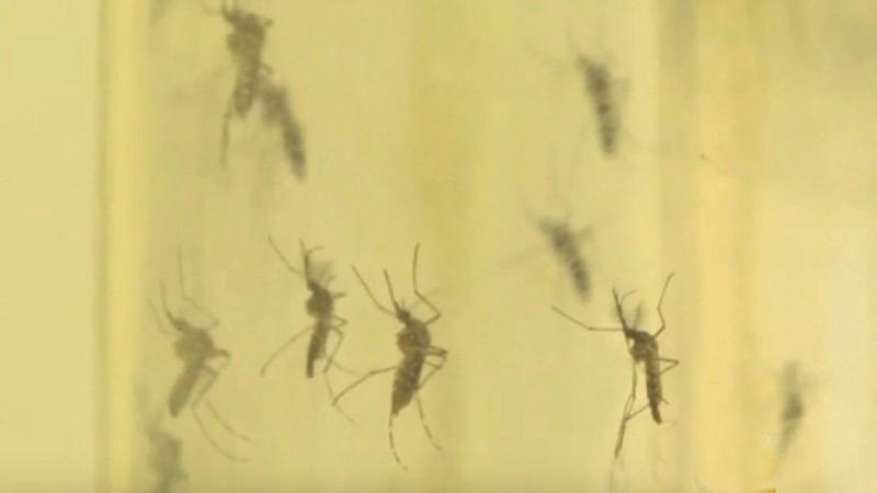 Εξαφανίστε άμεσα κουνούπια, μύγες και κατσαρίδες από το σπίτι σας με αυτό το φυσικό εντομοαπωθητικό!